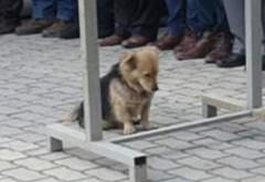 În fiecare zi, câinele pleca de acasă pentru câteva ore. Într-o zi, s-a decis să-l urmărească. Când a văzut ce făcea, a izbucnit imediat în lacrimi (GALERIE FOTO)