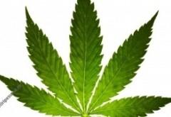 A fumat marijuana, iar apoi a sărit de la etajul patru al căminului: studentul este în stare gravă la spital