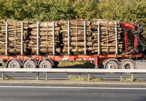 Pedepse mai mari în noul Cod Silvic. TIR-urile sau camioanele cu care sunt transportaţi arborii tăiaţi ilegal vor putea fi confiscate