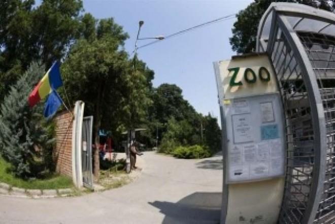 Carnagiu la Zoo Timișoara. Trei câini au ucis toți cangurii de la Grădina Zoologică