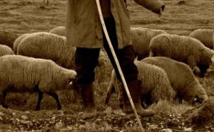 Un cioban a făcut un cadou de 4,5 milioane de euro! Cât câştigă un oier în România