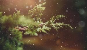 Prognoza meteo pentru Crăciun şi Revelion. Vremea în următoarele patru săptămâni
