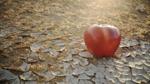 Criza alimentară la care omenirea se aștepta în 10-15 ani vine mai devreme. Economist: În România nu vor fi vremuri foarte bune