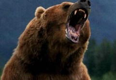 Avertismentul Greenpeace România: Tanczos Barna pregătește legalizarea vanatorii la trofeu, profitand de contextul actual