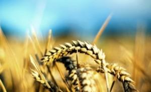Se schimbă agricultura în România: crește simțitor numărul cooperativelor agricole