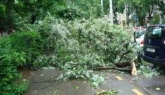 Peste 130 de copaci doborâţi de vânt şi 65 de maşini avariate, în ultimele 24 de ore, în Bucureşti