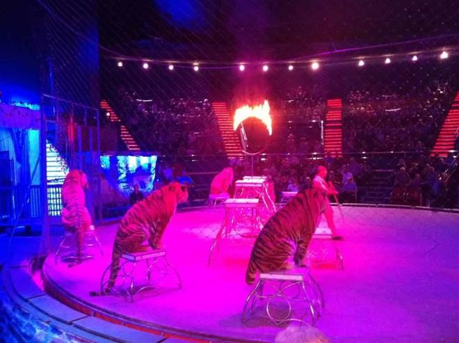 Incendiu la Circul Globus! Doi tigri şi alte nouă animale au murit intr-un incendiu