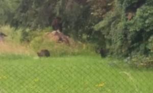 ALERTĂ la Grădina Zoologică. Doi îngrijitori sunt în stare gravă după ce au fost atacați de urși