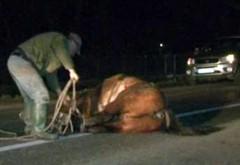 Accident pe DN1A, la Teisani. Un cal a fost spulberat de masina. Animalul a murit
