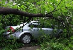 Proprietarii mașinilor avariate de copacii prăbușiți au dreptul la despăgubiri. Asigurarea nu este obligatorie