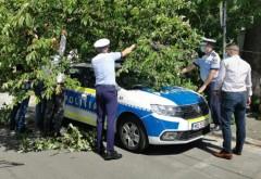 Ploiesti/ Un copac a cazut peste o masina a Politiei