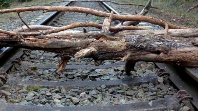 Circulaţia feroviară, ÎNCHISĂ între Braşov-Predeal. Un copac s-a prăbuşit pe calea ferată