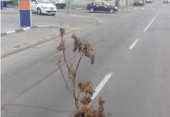 Găurile de pe străzile din Ploiești, acoperite cu crengi FOTO