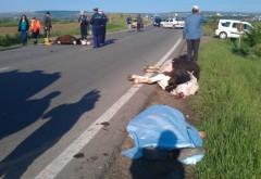 Accident in Nedelea. Microbuz cu pasageri a lovit o vaca