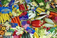 Eveniment inedit la Ploiesti: Iubitorii de plante pot face schimb de seminte traditionale