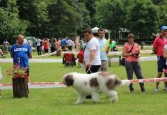 Expoziţie de câini şi demonstrații de dresaj canin în Parcul Bucov